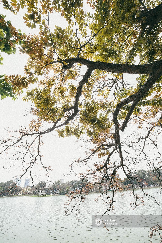 Hà Nội dịu dàng và xinh đẹp hơn trong sắc vàng của mùa cây thay lá - Ảnh 15.