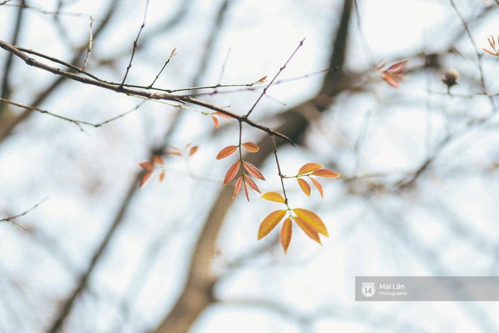 Hà Nội dịu dàng và xinh đẹp hơn trong sắc vàng của mùa cây thay lá - Ảnh 4.