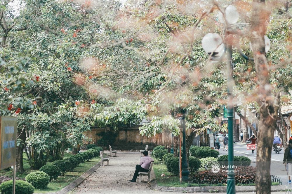 Hà Nội dịu dàng và xinh đẹp hơn trong sắc vàng của mùa cây thay lá - Ảnh 17.