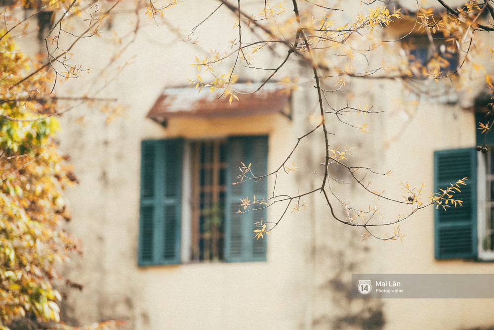 Hà Nội dịu dàng và xinh đẹp hơn trong sắc vàng của mùa cây thay lá - Ảnh 2.
