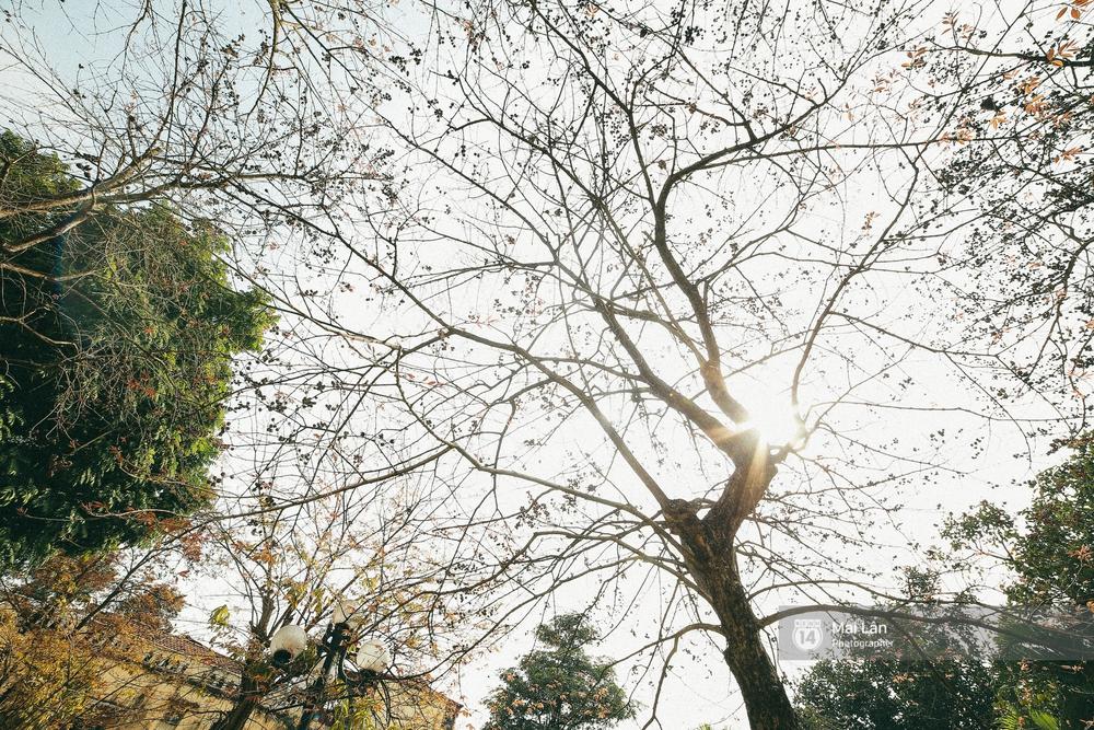 Hà Nội dịu dàng và xinh đẹp hơn trong sắc vàng của mùa cây thay lá - Ảnh 18.