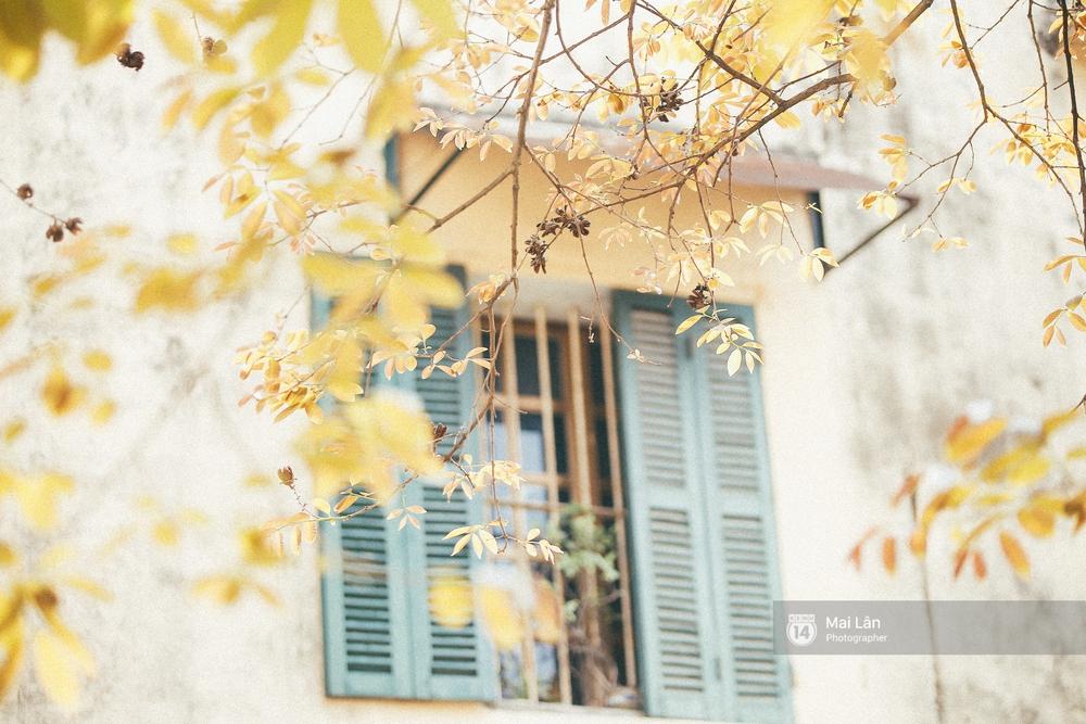 Hà Nội dịu dàng và xinh đẹp hơn trong sắc vàng của mùa cây thay lá - Ảnh 19.