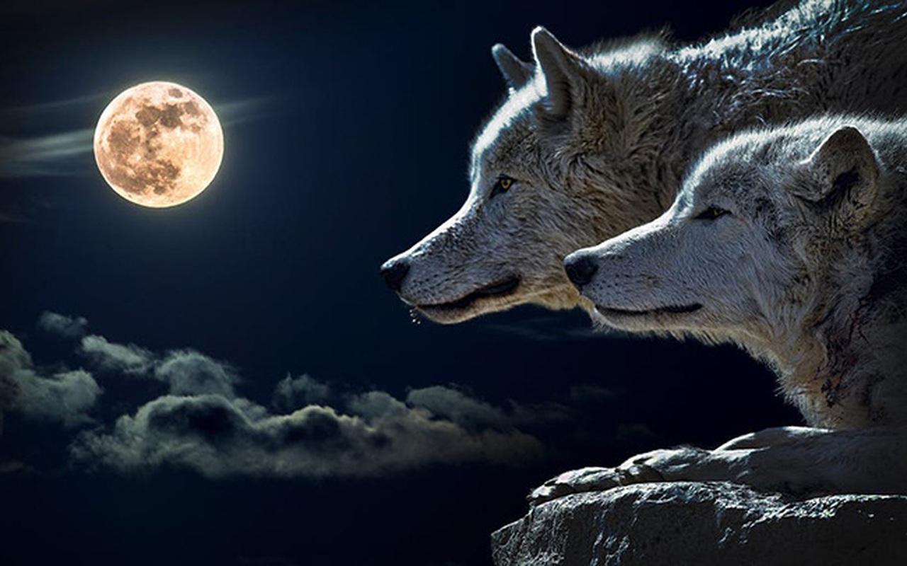 Chọn con vật dũng mãnh để khám phá thế mạnh và điểm yếu của bản thân