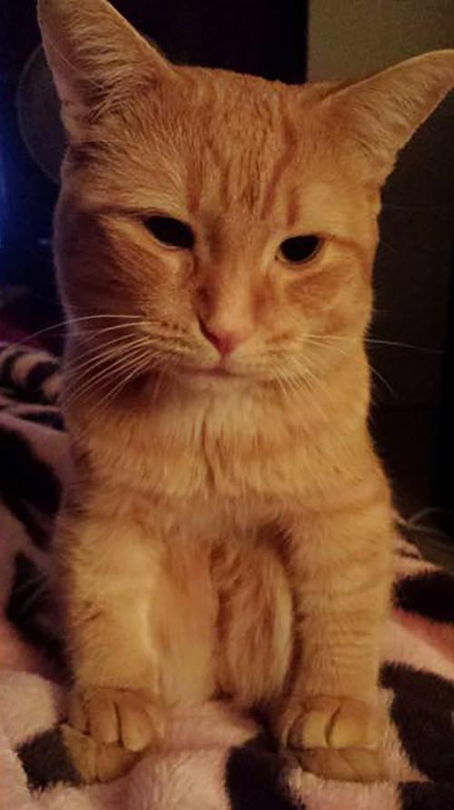 Nhìn mặt thộn của 18 em mèo ngồi xổm kiểu táo bón, không cười không lấy tiền - Ảnh 14.