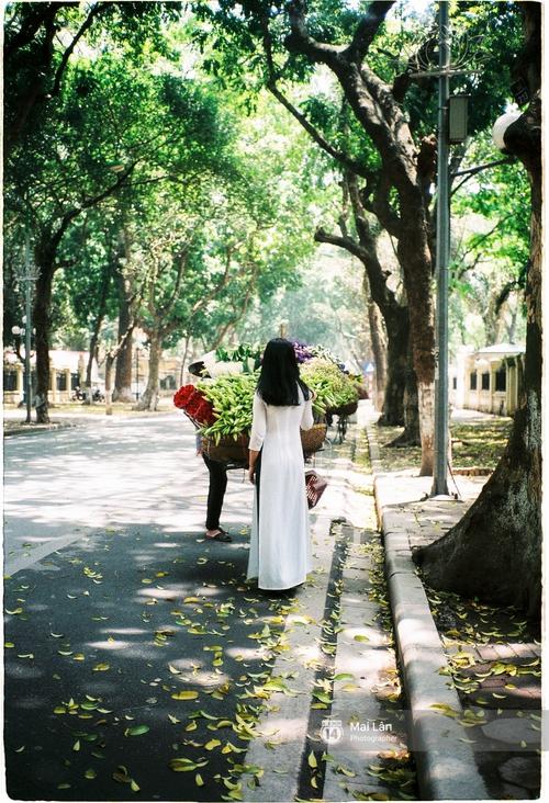 Những ngày Hà Nội rất nóng, nhưng lòng dịu lại vì cảnh lá rụng đẹp như mùa thu thứ 2 - Ảnh 10.