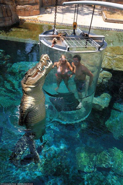 Nhiều du khách chi tiền triệu để trải nghiệm cảm giác mạnh, đối mặt với cá sấu ăn thịt người dài 5m - Ảnh 1.
