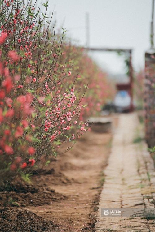 Mùa đông quá ngắn, bạn buồn vì không được mặc đồ lạnh, còn với các làng hoa ở Hà Nội - họ mất Tết! - Ảnh 9.