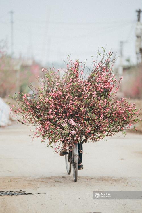 Mùa đông quá ngắn, bạn buồn vì không được mặc đồ lạnh, còn với các làng hoa ở Hà Nội - họ mất Tết! - Ảnh 11.