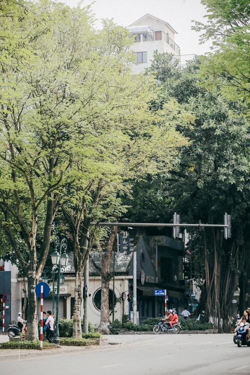 Hoa sưa nở rồi, tiết trời nồm ẩm tháng 3 của Hà Nội cũng vì thế mà dịu dàng hơn... - Ảnh 3.