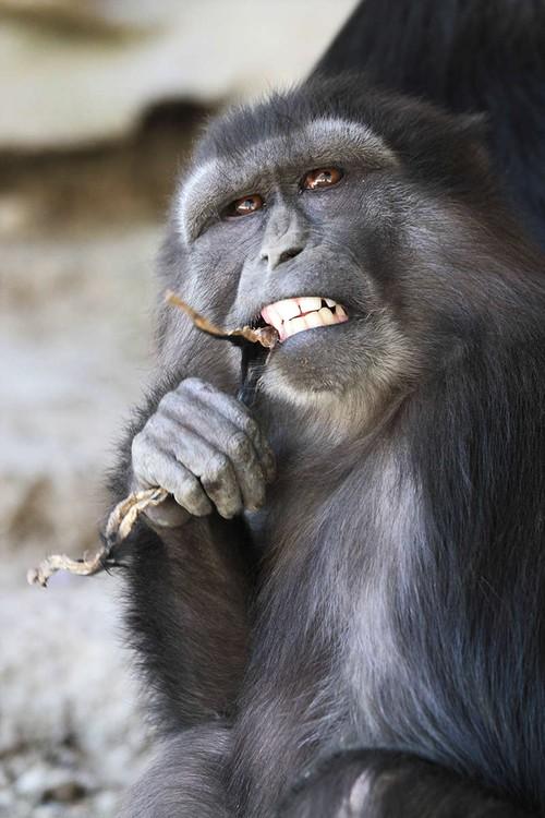 Hiện tượng ăn xác con trong thế giới động vật: lần đầu tiên khoa học được chứng kiến và vẫn chưa thể lý giải - Ảnh 4.