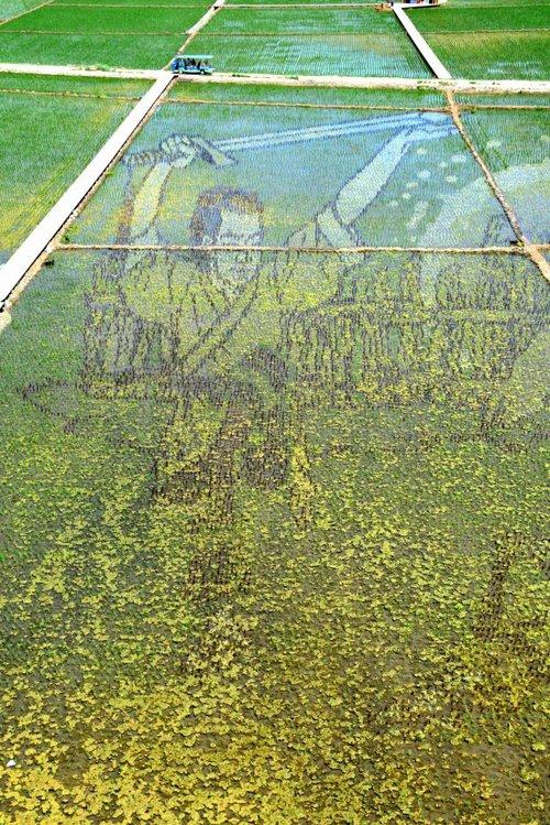 Những bức tranh 3D tuyệt đẹp được vẽ trên đồng lúa của nông dân Trung Quốc - Ảnh 3.