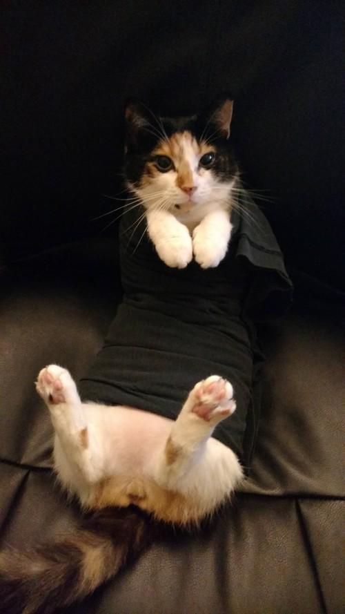 Chân dung 15 boss mèo lười nhác chỉ thích nằm cuộn tròn trong chăn - Ảnh 17.