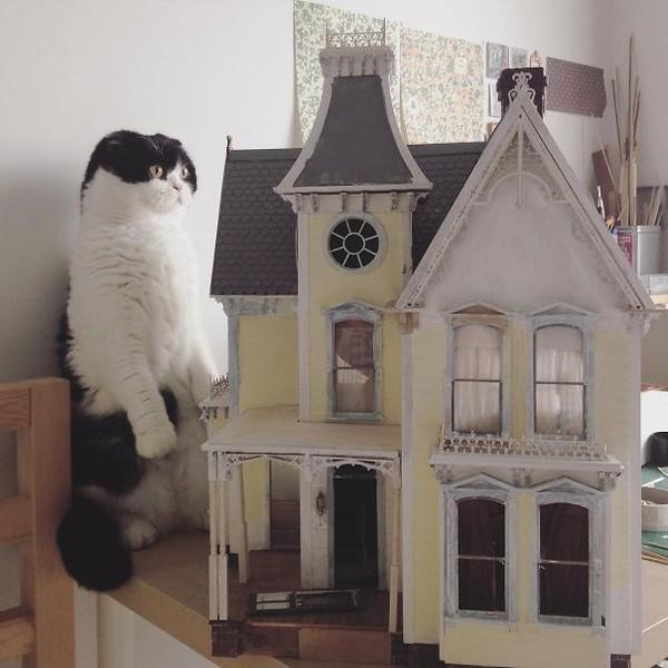 Nữ luật sư bỏ nghề đi thiết kế nội thất nhà... dành cho kiến - Ảnh 11.