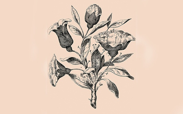 Chỉ 1% dân số đạt cảnh giới mắt thần mới biết có bao nhiêu khuôn mặt nấp trong đóa hoa