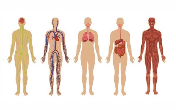 Học sinh giỏi 12 năm chắc gì đã trả lời đúng 6 câu hỏi về cơ thể người