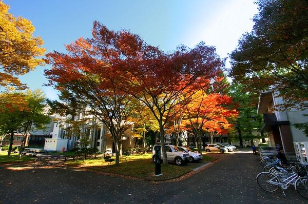 Lý do đi du học Nhật Bản trường Tohoku