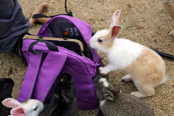 rabbit-island-bag_3383817k-daa83