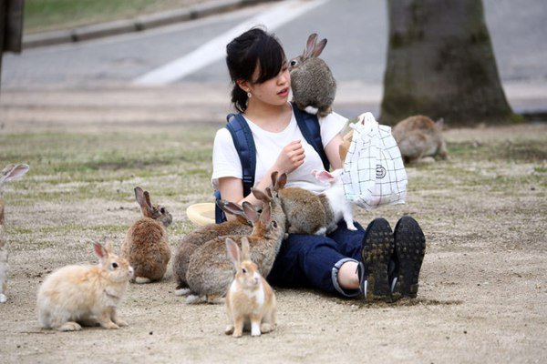 rabbit-island-girl_3383820k-daa83