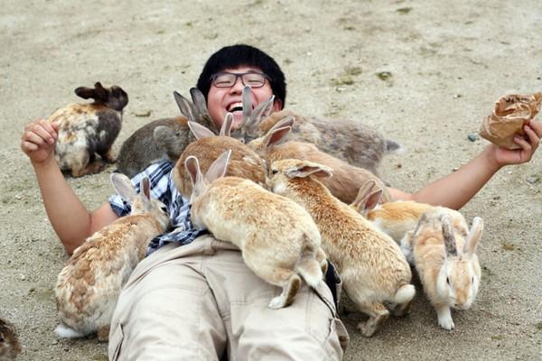 rabbit-island-laug_3383823k-daa83
