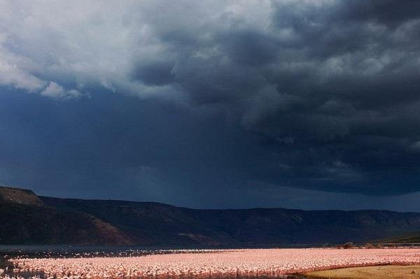Những hình ảnh hồng hạc bay lượn đẹp tuyệt trần 6