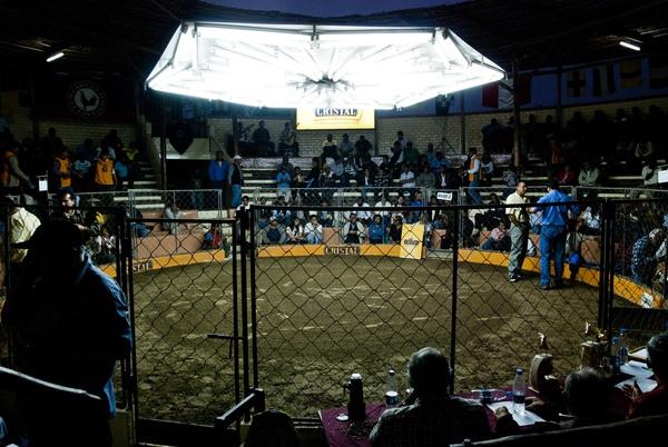 Chứng kiến cảnh chọi gà đẫm máu ở Peru 2