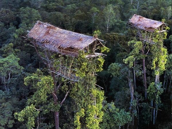 Bộ tộc sống trên cây duy nhất ở Trái đất 5