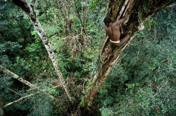 Bộ tộc sống trên cây duy nhất ở Trái đất 7