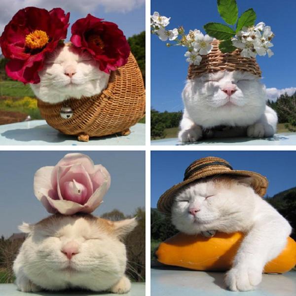 Hiểu tâm lý loài mèo qua tiếng kêu và hành động 4