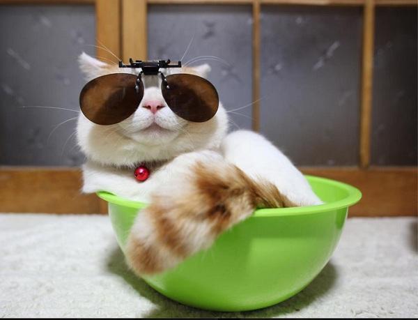 Hiểu tâm lý loài mèo qua tiếng kêu và hành động 5
