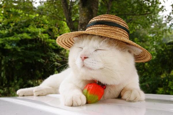 Hiểu tâm lý loài mèo qua tiếng kêu và hành động 10