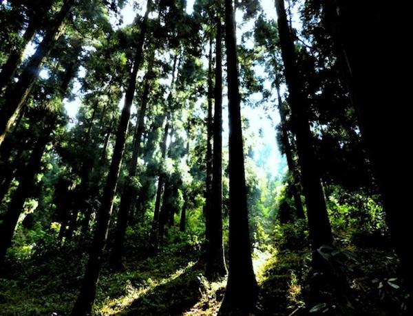 9 khu rừng bị ám kinh khủng nhất trên Trái đất 3