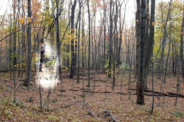 9 khu rừng bị ám kinh khủng nhất trên Trái đất 6