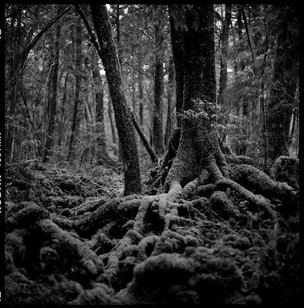 Giải mã bí ẩn lạnh gáy trong khu rừng tự sát 5