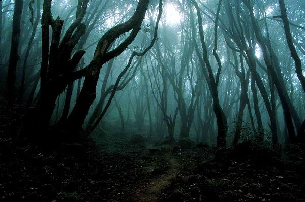 Giải mã bí ẩn lạnh gáy trong khu rừng tự sát 6