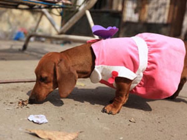 Váy xinh cho cún iu