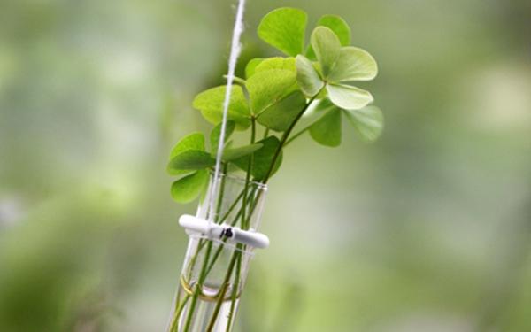 Ý tưởng tạo lọ hoa treo cửa sổ cực hay