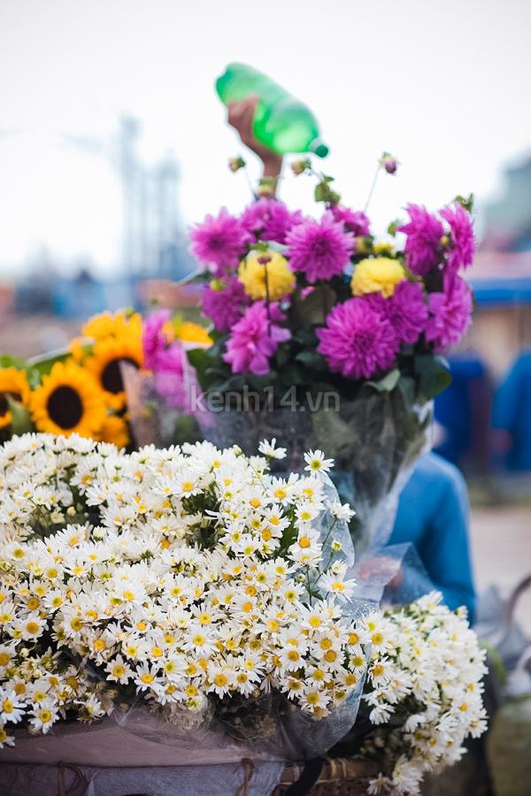 Ngỡ ngàng cúc họa mi đẹp tinh khôi trên phố Hà Nội 4