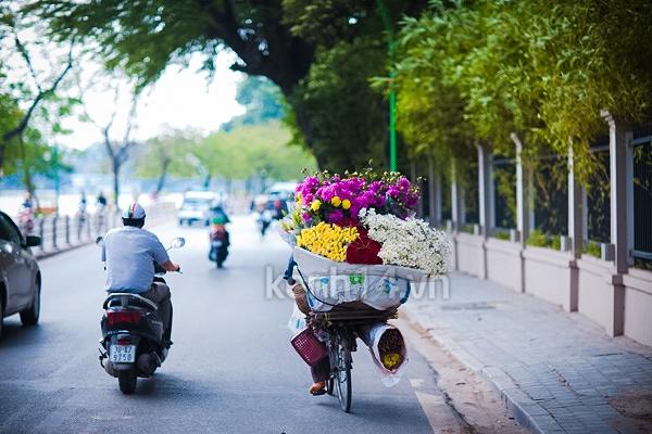 Ngỡ ngàng cúc họa mi đẹp tinh khôi trên phố Hà Nội 8