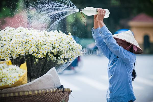 Ngỡ ngàng cúc họa mi đẹp tinh khôi trên phố Hà Nội 19