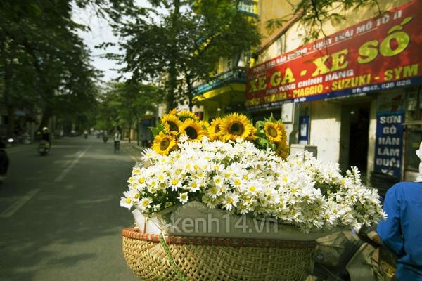Ngỡ ngàng cúc họa mi đẹp tinh khôi trên phố Hà Nội 16