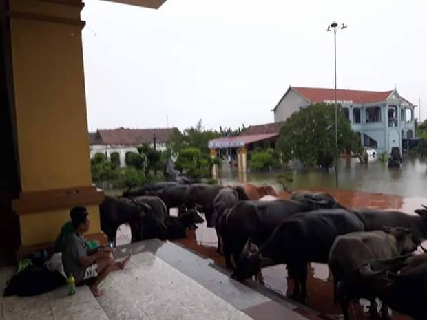 Chùm ảnh: Những hình ảnh nhói lòng về mưa lũ kinh hoàng ở miền Trung - Ảnh 13.