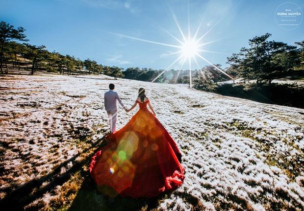 Cánh đồng tuyết đẹp đến ngỡ ngàng ở Đà Lạt - Ảnh 9.