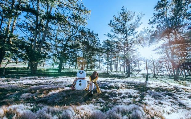 Cánh đồng tuyết đẹp đến ngỡ ngàng ở Đà Lạt - Ảnh 5.