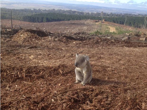 Chùm ảnh chấn động về ảnh hưởng của ô nhiễm môi trường đối với các loài động vật toàn cầu - Ảnh 6.