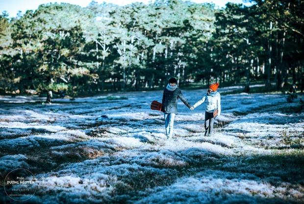 Cánh đồng tuyết đẹp đến ngỡ ngàng ở Đà Lạt - Ảnh 1.