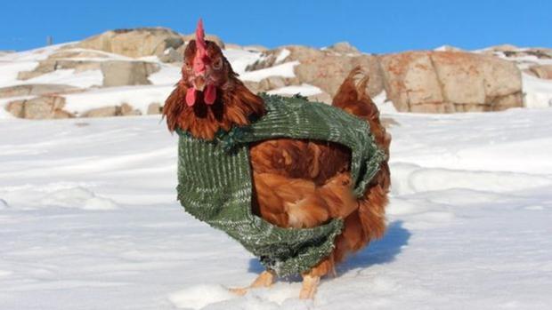 Nàng gà mái nắm tay trai đẹp đi khắp thế gian - Ảnh 9.