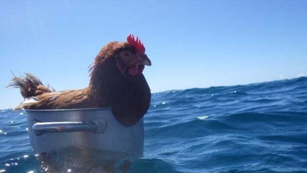 Nàng gà mái nắm tay trai đẹp đi khắp thế gian - Ảnh 2.
