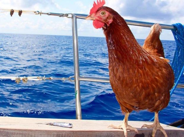 Nàng gà mái nắm tay trai đẹp đi khắp thế gian - Ảnh 7.