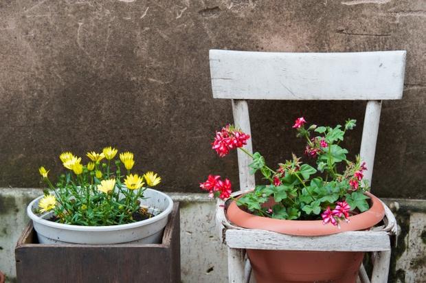Đem thiên nhiên vào nhà với 17 ý tưởng trưng bày cây cảnh bắt mắt - Ảnh 10.