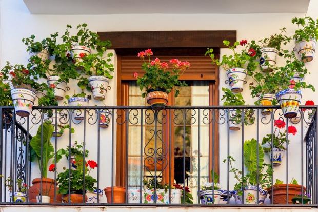 Đem thiên nhiên vào nhà với 17 ý tưởng trưng bày cây cảnh bắt mắt - Ảnh 2.